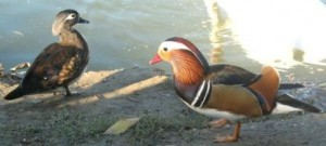 Птичий питомник