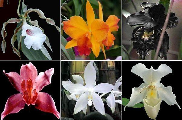 домашнее разведение орхидей