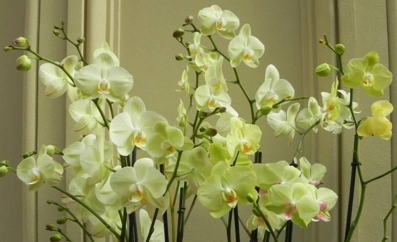 Разведение орхидей