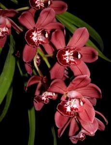 Домашний бизнес для женщин - питомник орхидей