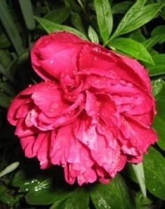 Выращивание лекарственных растений, как бизнес