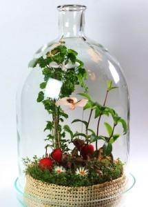 Сад в бутылке – бизнес без вложений