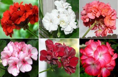 Выращивание рассады цветов на продажу