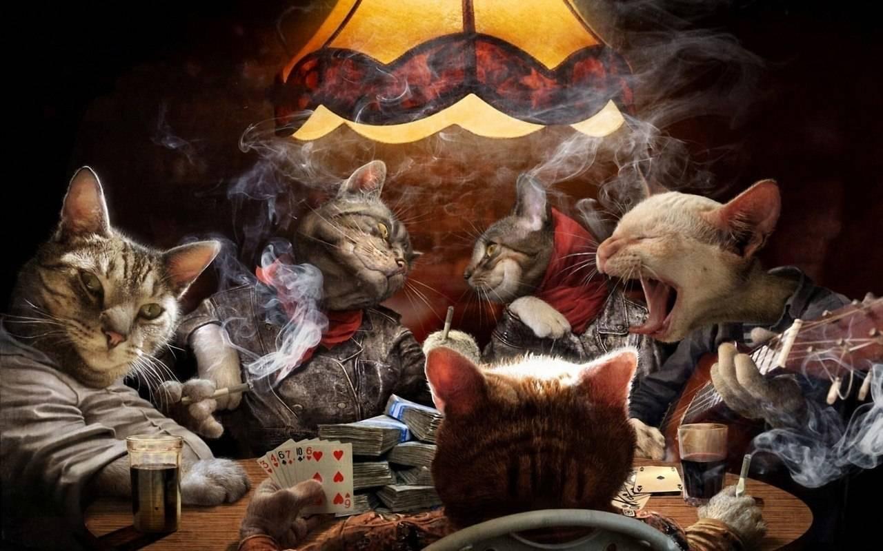 заработать играя в покер