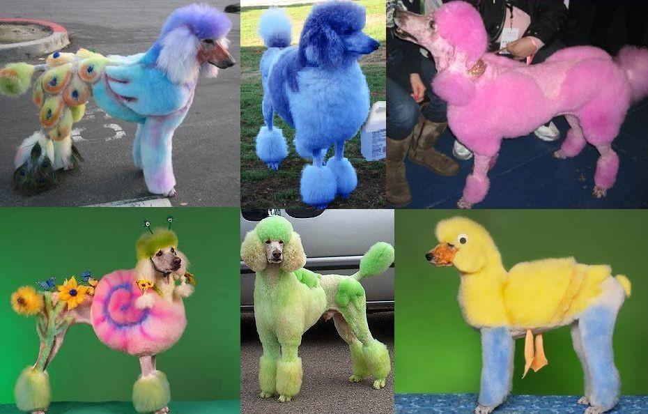 краски для собак