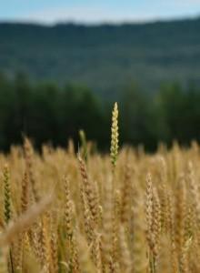 Японцев и сингапурцев интересует российское сельское хозяйство
