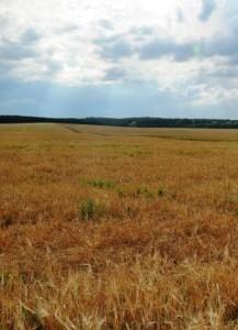 Засуха в США вызовет рост цен на продукты во всем мире