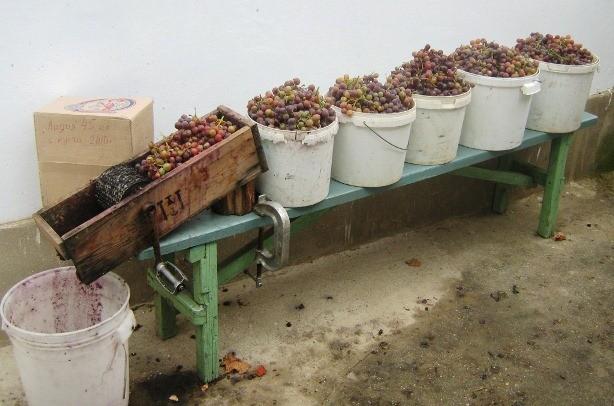 производство домашнего вина