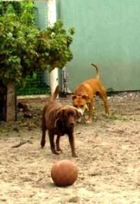 Бизнес без вложений - дневной лагерь для собак