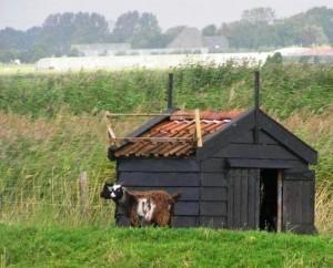 Поездка в Голландию - впечатления