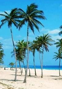 Куба разрешила частникам заниматься оптовой торговлей