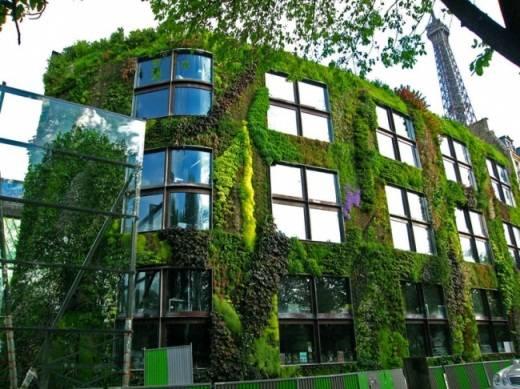 Свежие бизнес идеи – вертикальное озеленение в городе