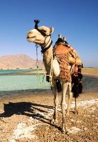 Египет получит финансовую поддержку от ОАЭ