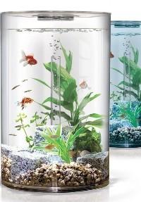 Бизнес по продаже аквариумных рыб