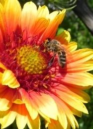 Бизнес на пасеке: как заработать на пчелах