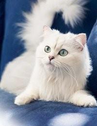 Бизнес идея продажа кошачьих лотков