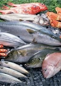 Бизнес идея. Выращивание морской рыбы в аквариуме