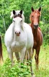 Бизнес идея. Разведение лошадей