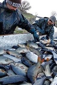 Бизнес идея. Разведение рыбы