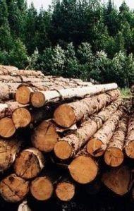 Бизнес идея. Сушка древесины