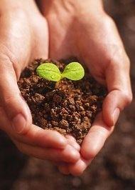Бизнес идея. Выращивание саженцев