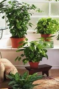 Бизнес идея. Гостиница для растений