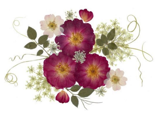 волшебные flower cards