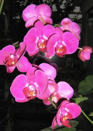 komnatnye-cvety-na-prodazhu