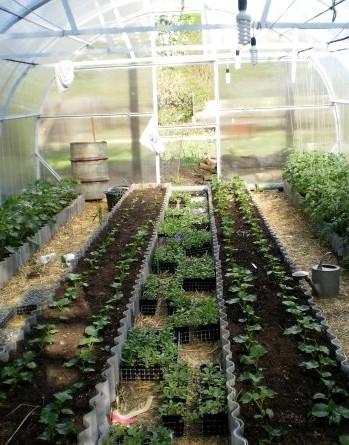 Как заработать на выращивании рассады цветов инвестиционный проект на приобретение комбайнов