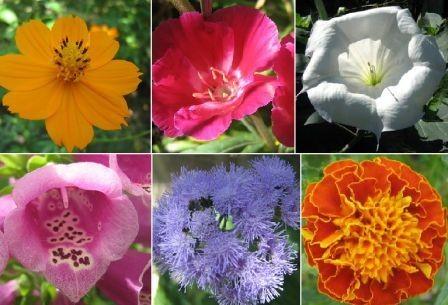 Заказ рассады цветов 2012 доставка цветов киев не дорого